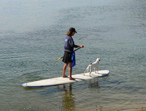 sup boarding with dog