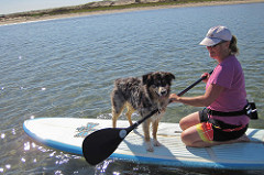 teach your dog to stand up paddle board